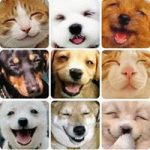 Joburg Pet and House Sitters